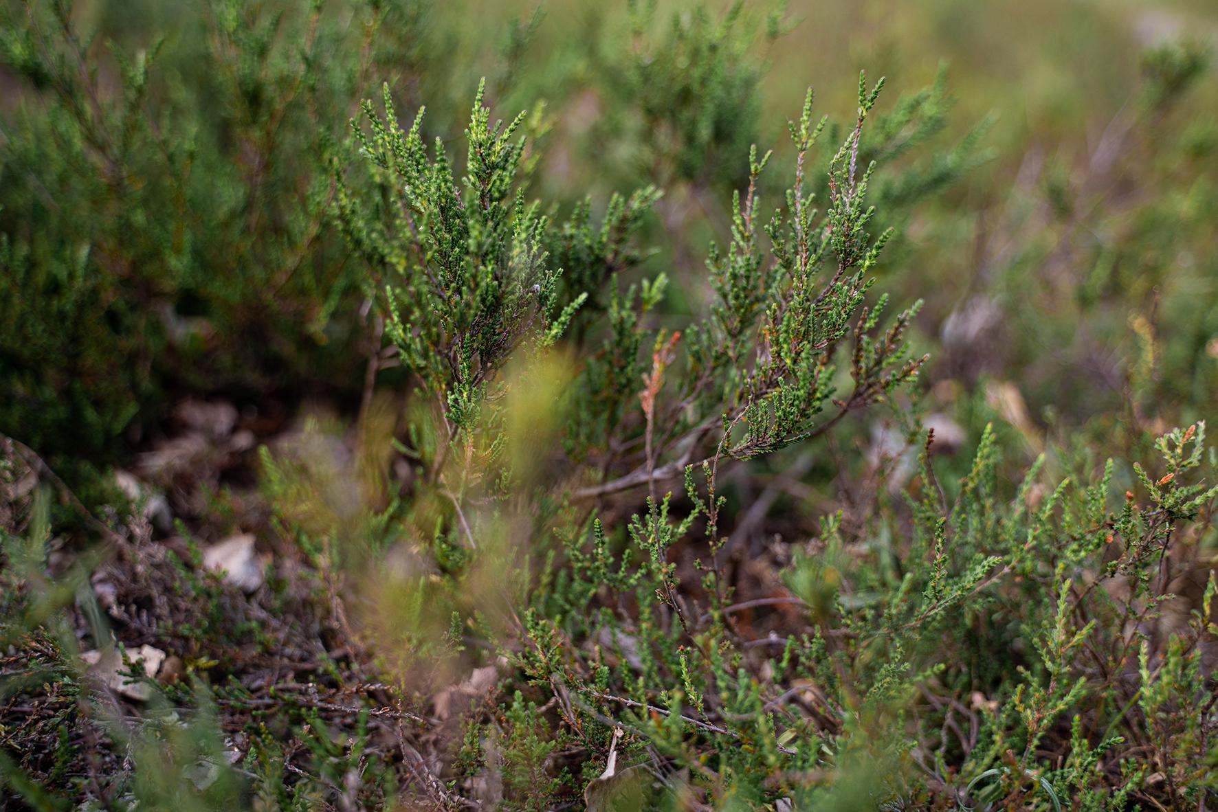Detailfoto Heidelandschaft Naturfotos Fotografin Bremen