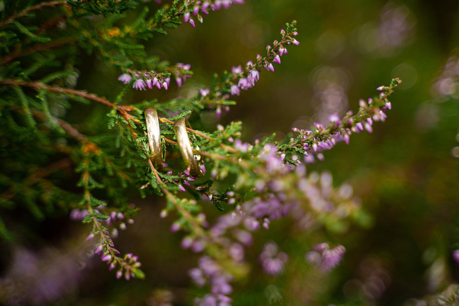 Ringdetailfoto in der Heide