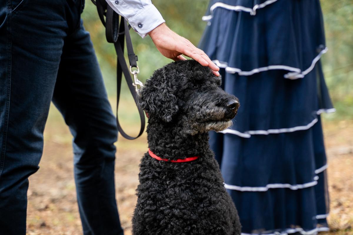 Brautpaar mit Hund Porträt Hochzeitsfotos Bremen