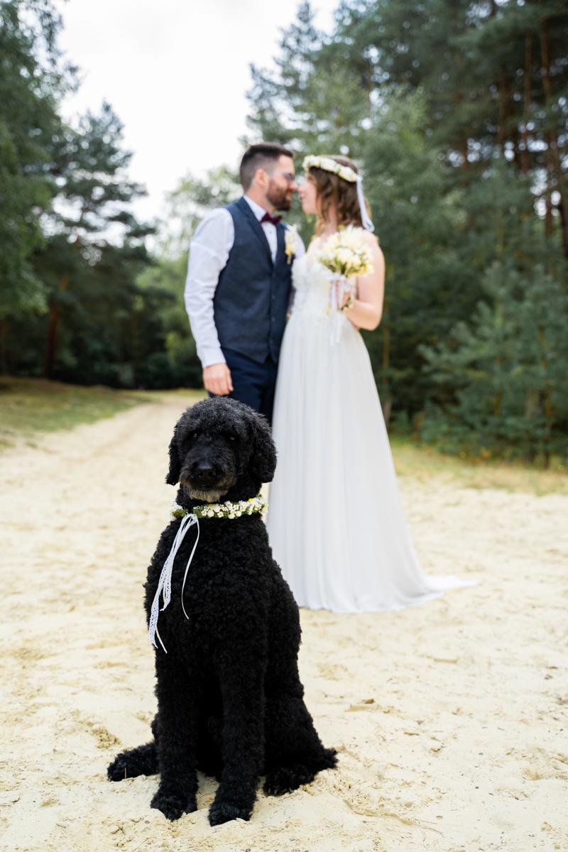 Der Star des Tages Hund bei der Hochzeit Hochzeitsfotograf bremen