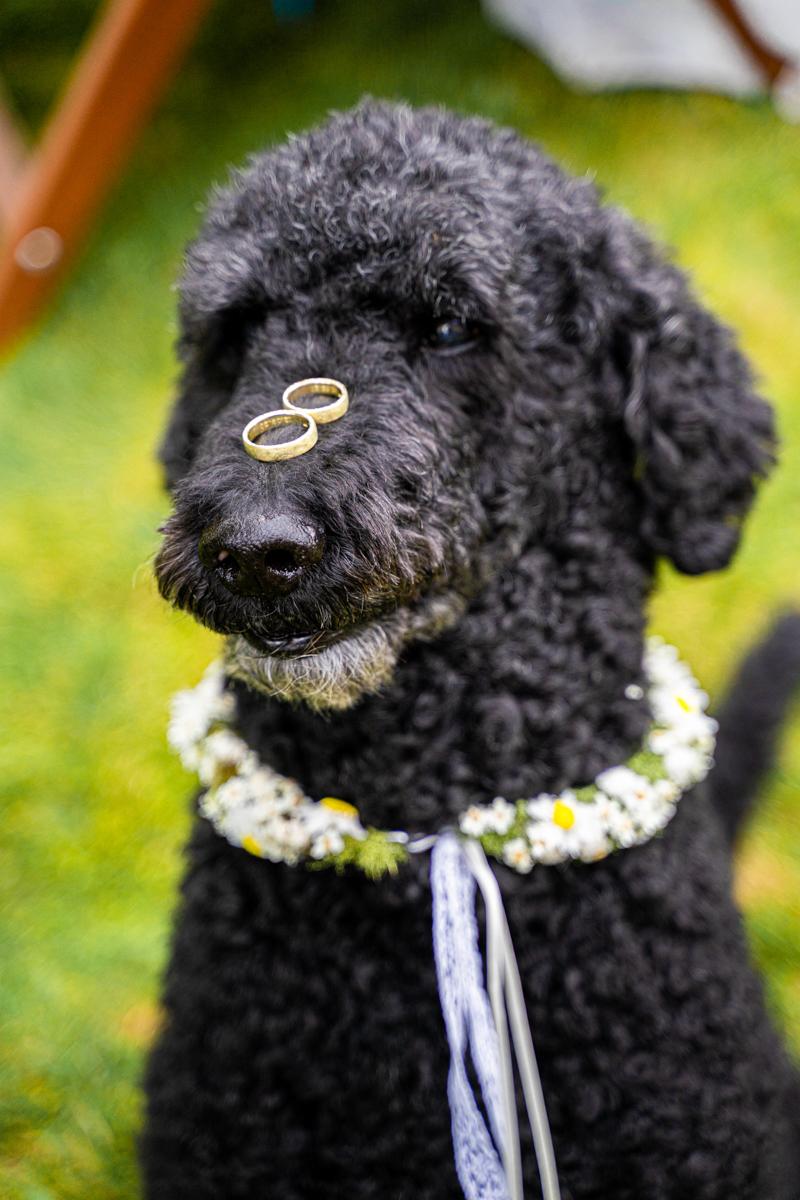 Hochzeitsfotos mit Hund Ringe auf der Nase Gartenhochzeit