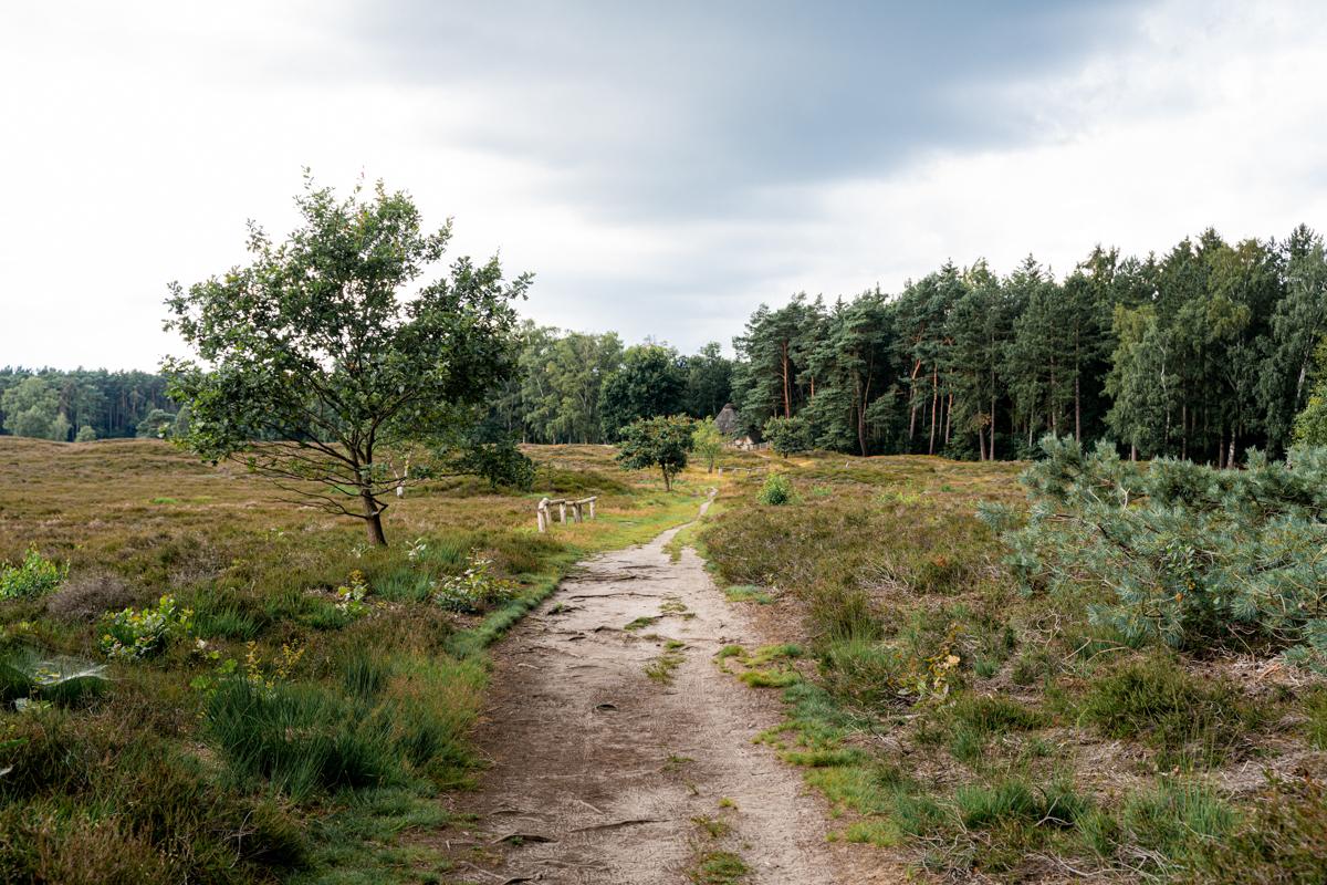 Heidelandschaft Pestruper Gräberfeld Fotografin bremen