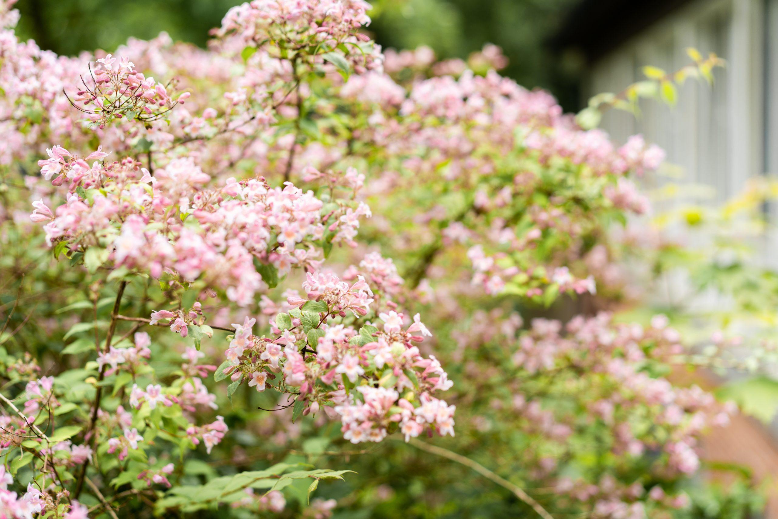 Blumen Hochzeitsblumen Outdoor Wedding